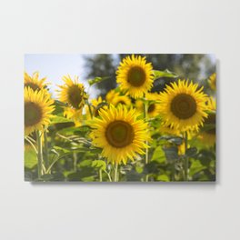 Sunflowers happiness Metal Print