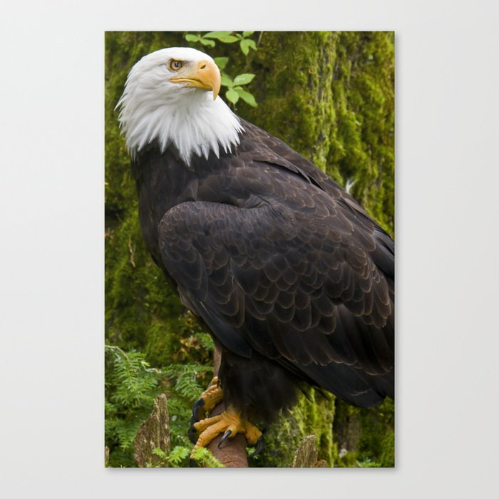 Catch me in Ketchikan  Canvas Print