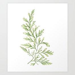 Fern Leaf Watercolor Painting Art Print