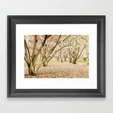 Blossom of Spring Framed Art Print