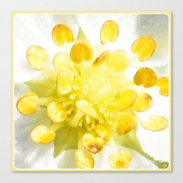 Yellow Stamen Sunshine | Flower | Nadia Bonello Canvas Print