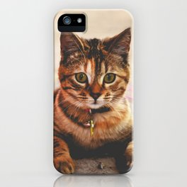 Cute Young Tabby Cat Kitten Kitty Pet iPhone Case