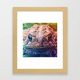 HollyWood Toad Framed Art Print