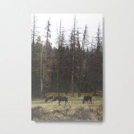 Wandering Metal Print