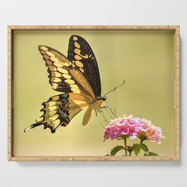 Giant Swallowtail Serving Tray