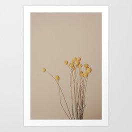 Yellow Craspedia / Billy Balls, dried flowers nature photography. Art Print