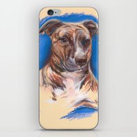pit bull iPhone & iPod Skins featuring Brindle Pit Bull Portrait by M.M. Anderson Designs