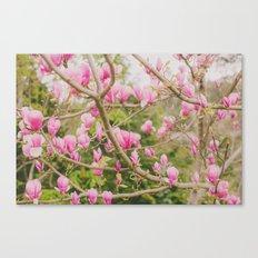 Strawberry Magnolias Canvas Print