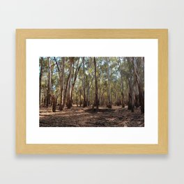 Gumtree Forest Framed Art Print