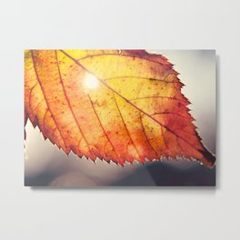 sunshine in autumn Metal Print