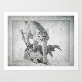 Bobcat in the Woods Art Print