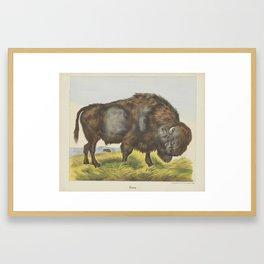 Bison, firma Jos. Scholz, 1829 - 1880 Framed Art Print