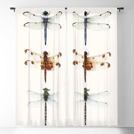 Dragonfly Collector Blackout Curtain