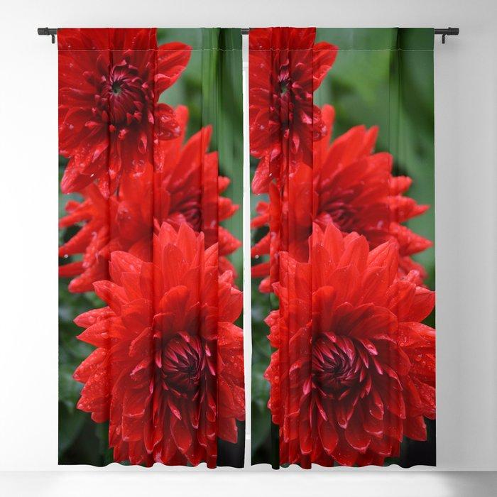 Fresh Rain Drops - Red Dahlia Blackout Curtain