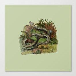 Snake Wildlife Illustration Canvas Print