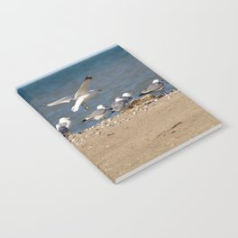 Landing | Seagull Photography Notebook