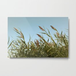 August Breeze #5 - Modern Nature Photograph Metal Print