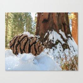 Sequoia Cone in Snow Canvas Print