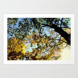 Fall  Breeze Art Print