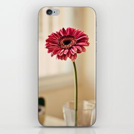 Flower in Window iPhone Skin