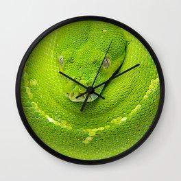 Green Tree Python (Morelia viridis) Wall Clock