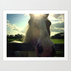 Sunny Horse Art Print