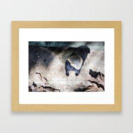 Brazilian Squirrel  Framed Art Print
