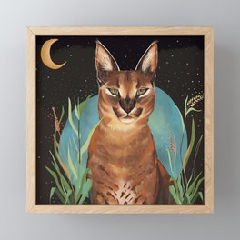 Caracal Framed Mini Art Print