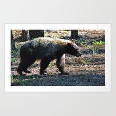Brazos Canyon Bear Art Print