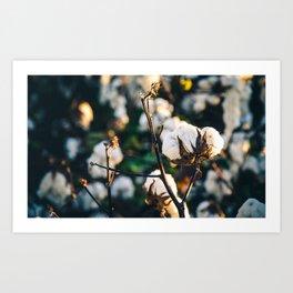 Cotton Field 20 Art Print