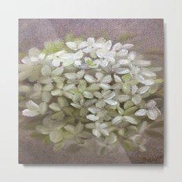 White Hydrangeas Metal Print
