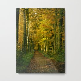 autumn forest path Metal Print