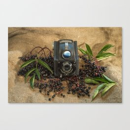 Ensign and the Elderberries Canvas Print