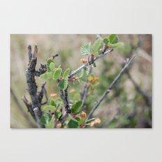 Little Leaves Canvas Print