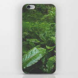 Old Growth Ferns iPhone Skin