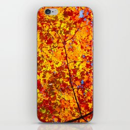 Blazing Fall Canopy iPhone Skin