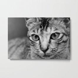 Portrait of a Feline Metal Print
