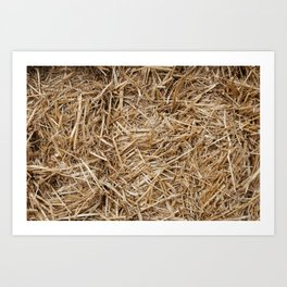 Hay day Art Print