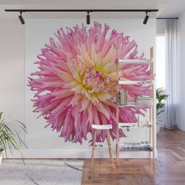 Pink Dahlia on a transparent background Wall Mural