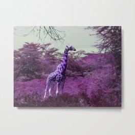 Wild Giraffe in Pink Metal Print