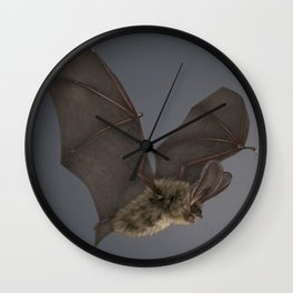 Brown Long-eared Bat Wall Clock