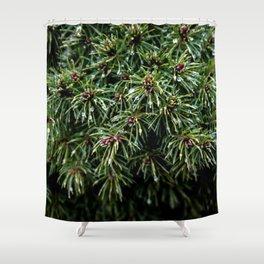 Coniferous Rainforest Shower Curtain