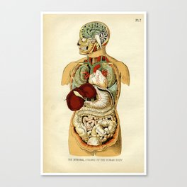 Internal organs of the Human Body Canvas Print