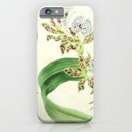 Flower 1433 eulophia mackaiana Mr Mackay s Eulophia16 iPhone Case