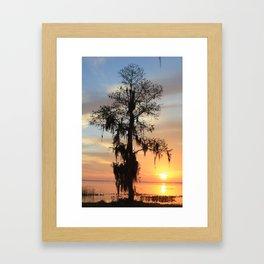 Sunrise Cypress Framed Art Print