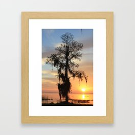 Sunrise Cypress Framed Art Print