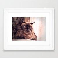 cookie Framed Art Prints featuring Cookie by Rachel's Pet Portraits