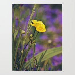 Buttercup Blues Poster