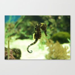 Tropical Seahorse with Coral Canvas Print