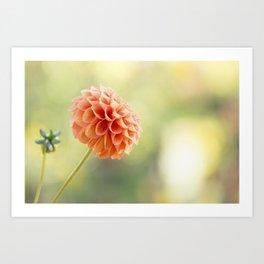 Orange Dahlia Flower Art Print